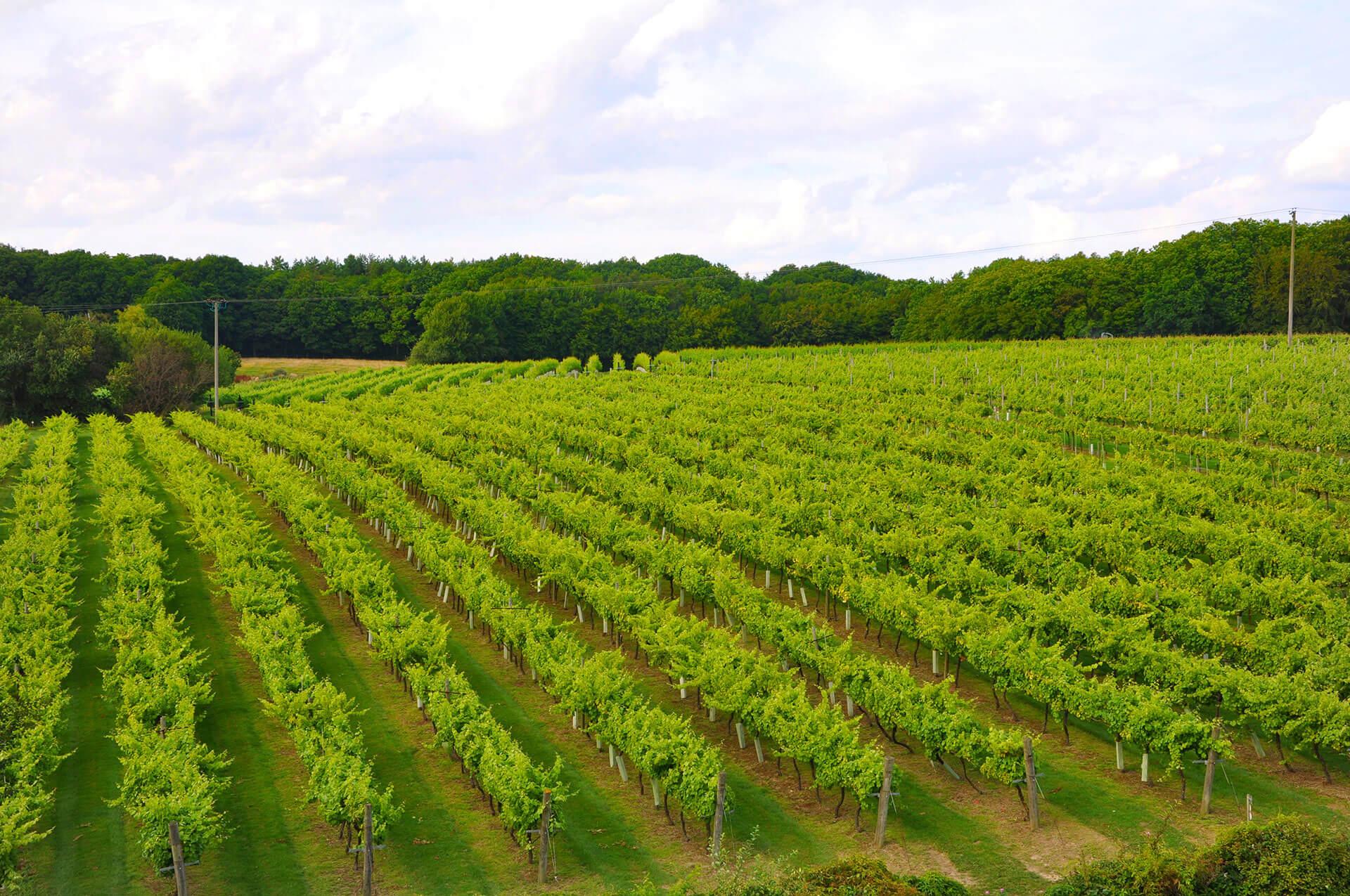 Biddenden Vineyards Kent