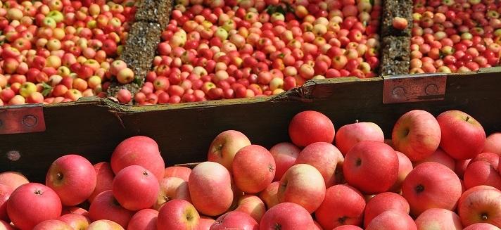 Apples-2-for-Website