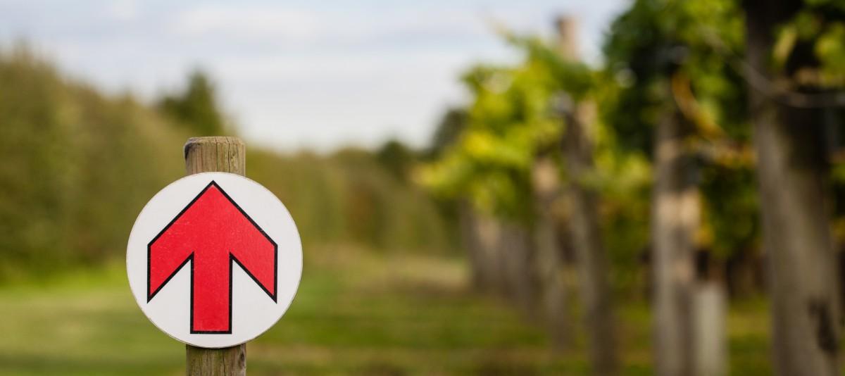 Biddenden Vineyard Walk