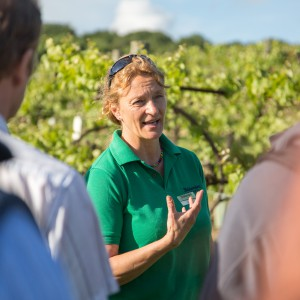 Private Guided Tours at Biddenden Vineyards