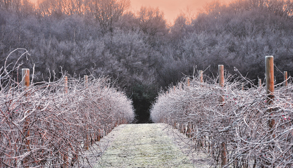 Winter at Biddenden Vineyards Kent