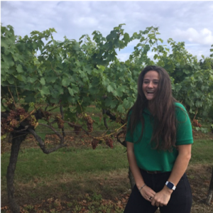 Experience a working vineyard at Biddenden