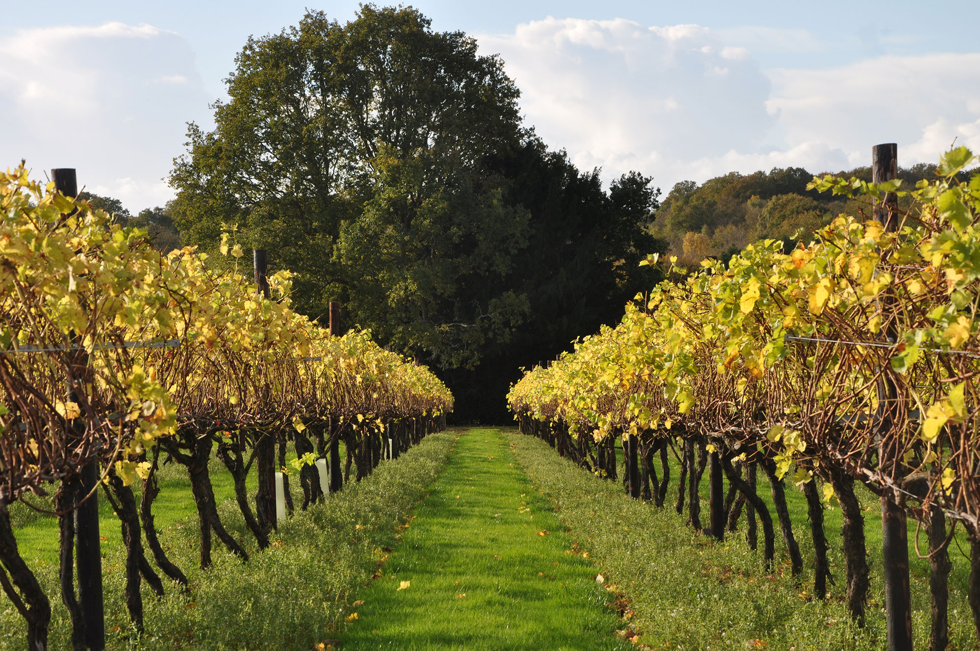 Biddenden Vineyards in the Autumn