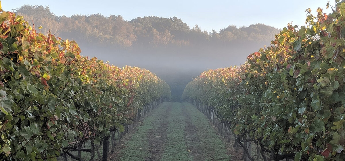 Biddenden Vineyards in the Autumn