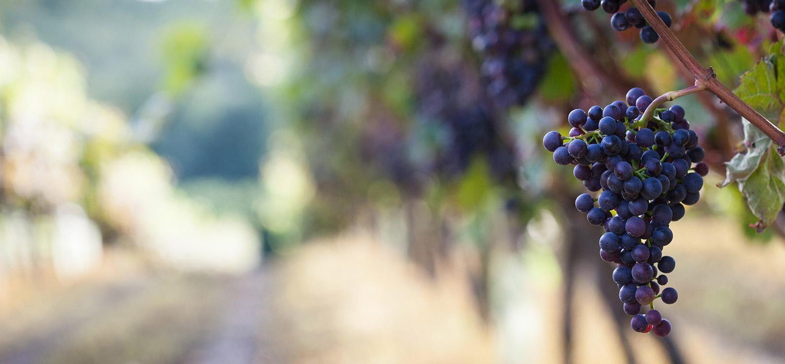 Biddenden Vineyards - Our Wines