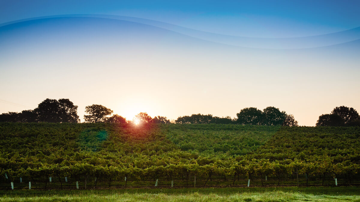 Biddenden Vineyards Sunset