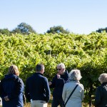 Biddenden Vineyard Tours