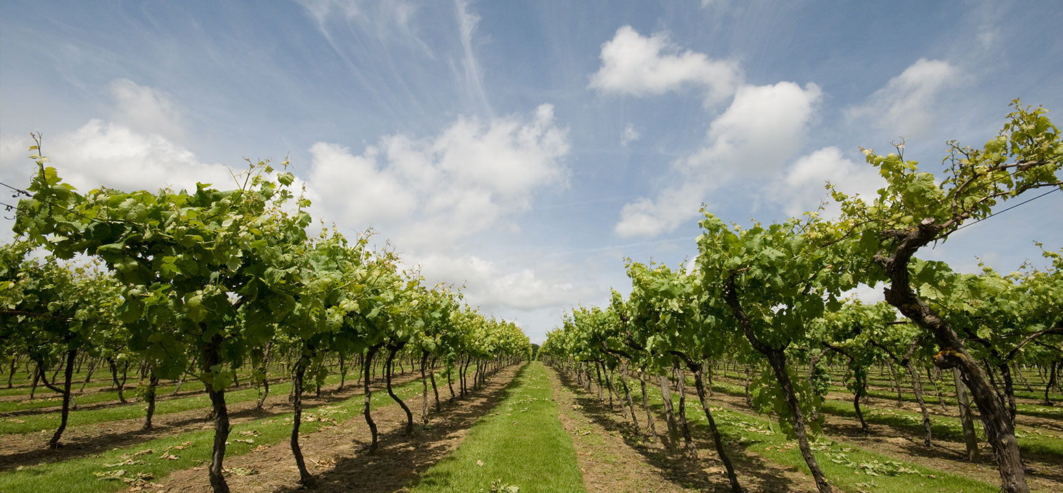 Biddenden Vineyards Visits